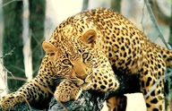 africanspiral com accommodation south africa, greater kruger areasome of the oldest and most well known game reserves are found in the mpumalanga region including the world renown kruger national park encompassing some 19